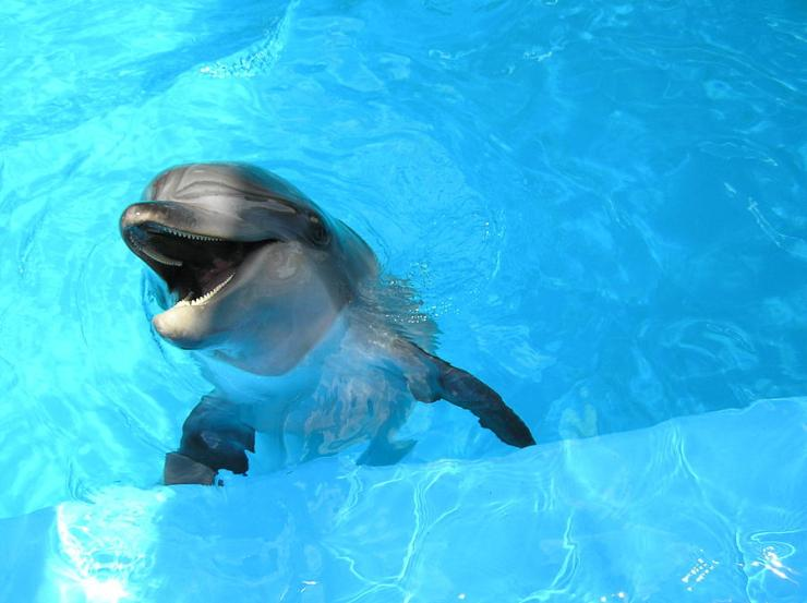 laughing-dolphin-michael-macgregor